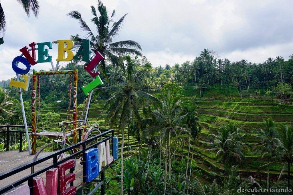 Arrozal Bali