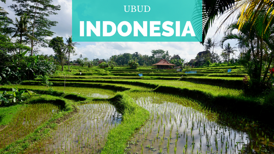 [Indonesia] Ubud y alrededores-2