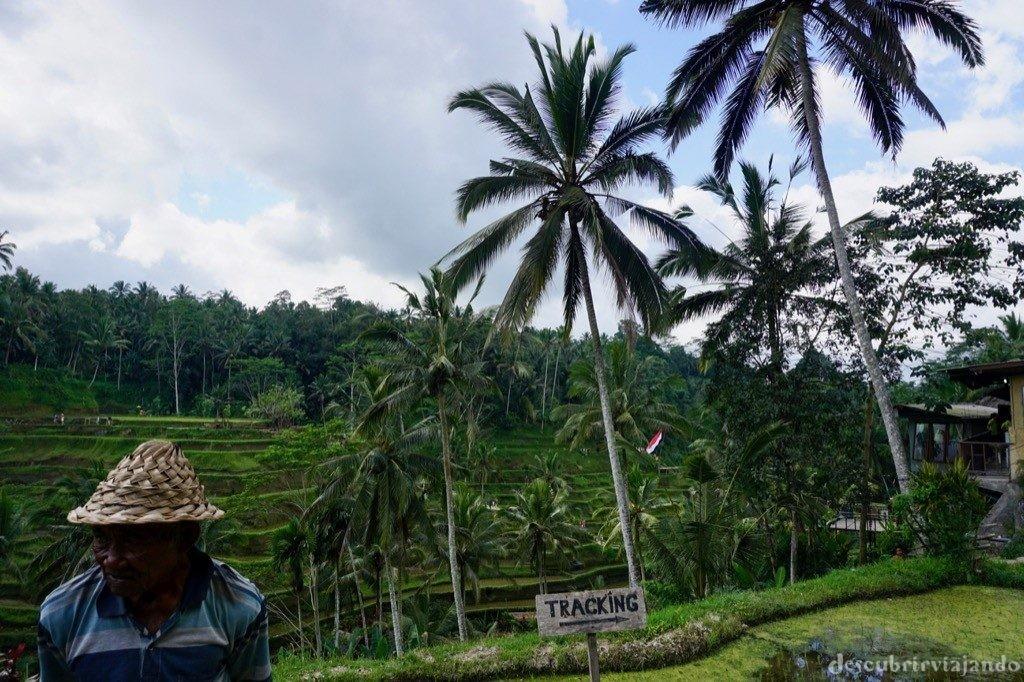 Trabajador en Tegalalang Ubud