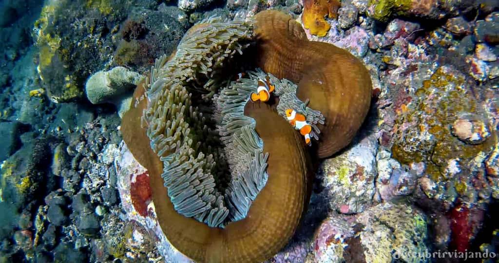 nemo-tulamben-snorkel-bali
