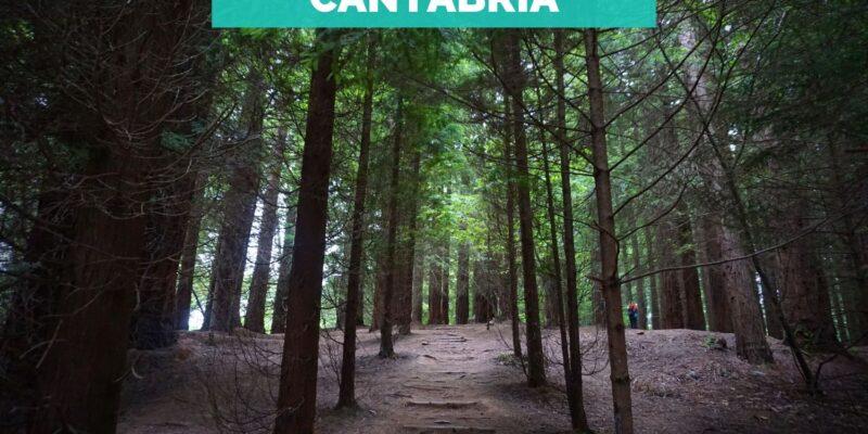 Bosque-Secuoyas-Cantabria-rutas